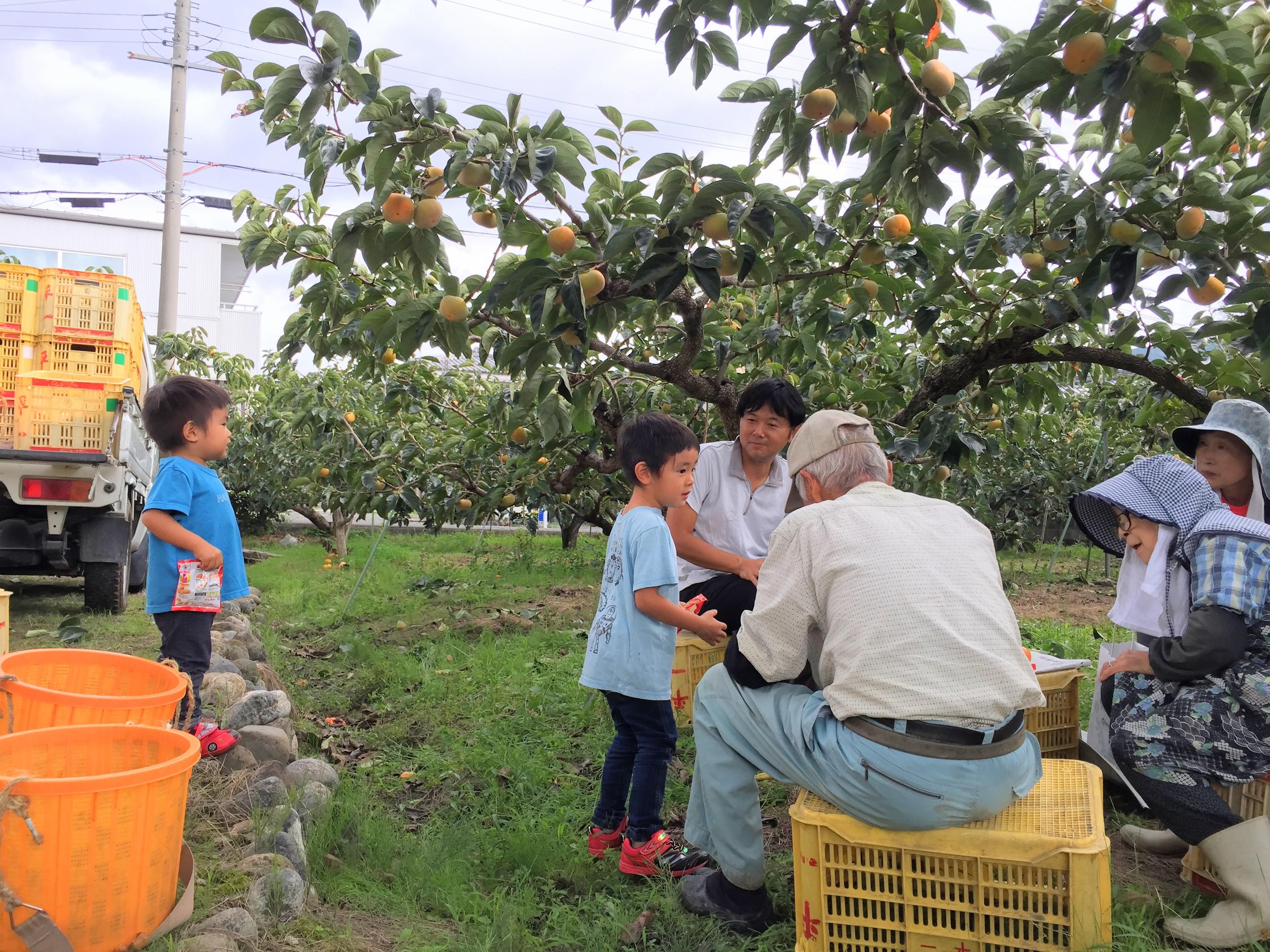 n域の柿農家さんの収穫を家族でお手伝い。廃棄される柿も頂き、無添加こどもグミぃ~。にする。.JPG (2.03 MB)